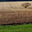 Ploughed Earth, Tree and Grass. by Billlee