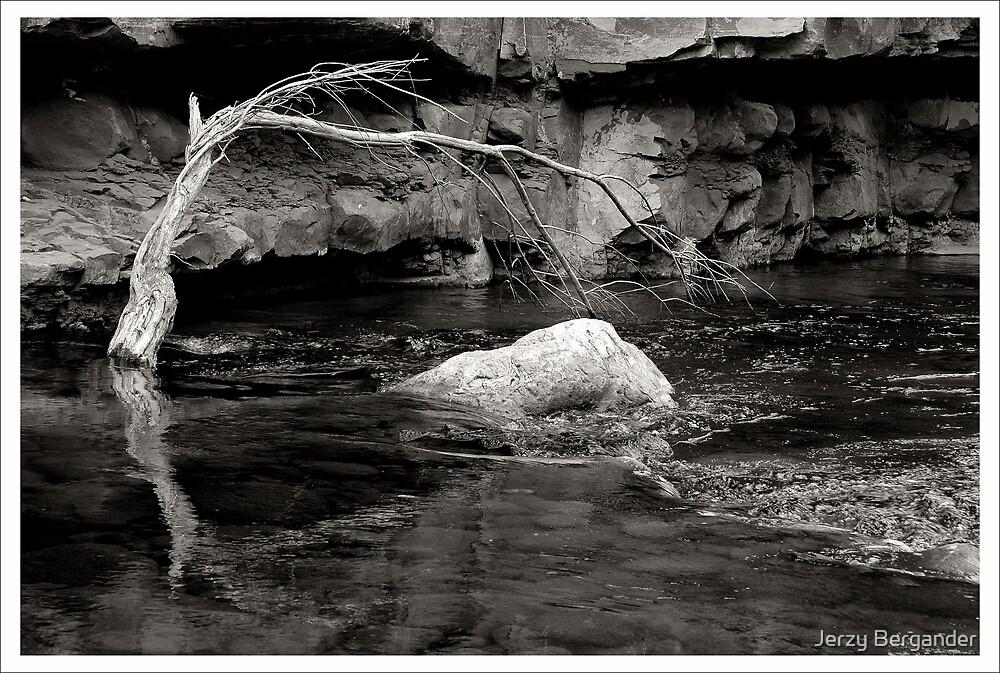 Oak Creek1 by Jerzy Bergander
