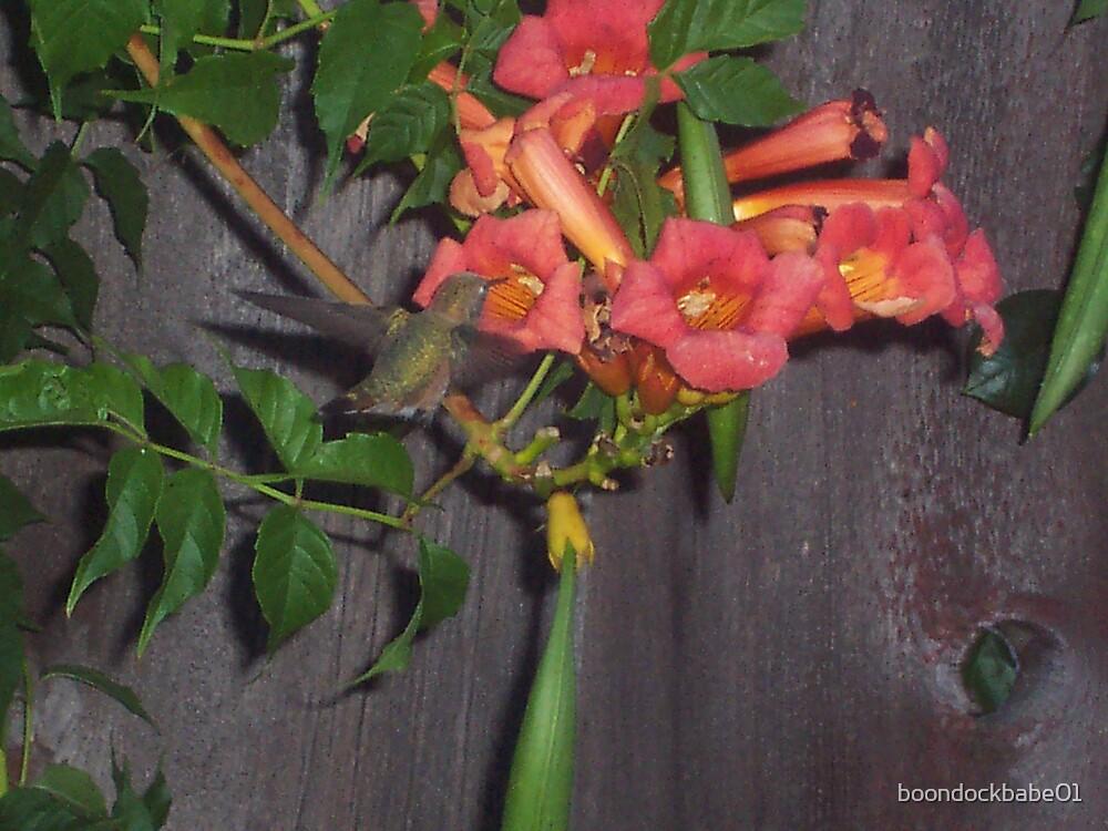 Feeding time for Oregon Humming Bird by boondockbabe01