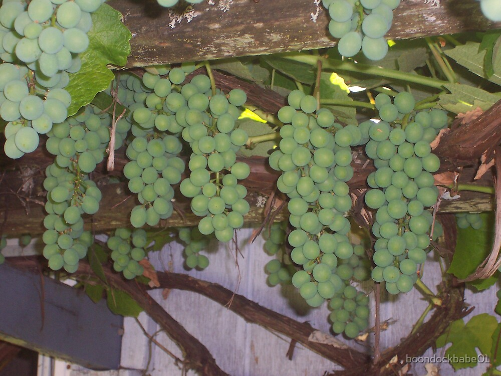 O Grapes! by boondockbabe01