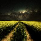 Field Of Dreams by martin bullimore