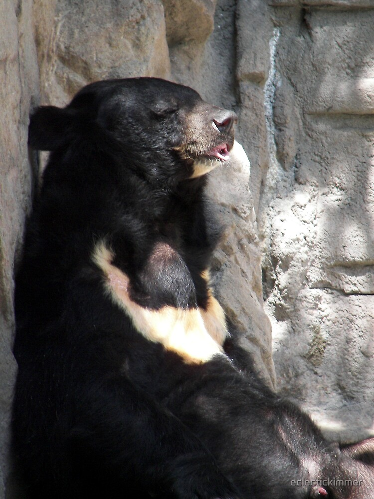 Bearly Resting by eclectickimmer