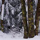 A Lichen to Oak by Wayne King
