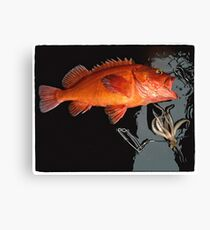 Red Snapper and Squid Canvas Print