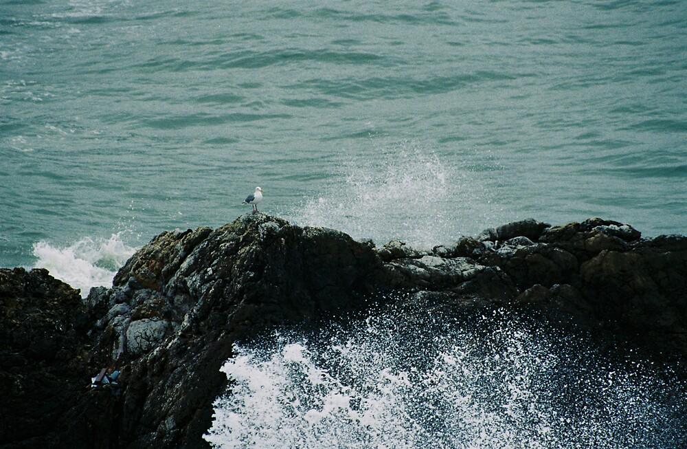 Gull vs Crashing Waves by sillumgungfu