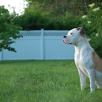 American Bulldog by JPac