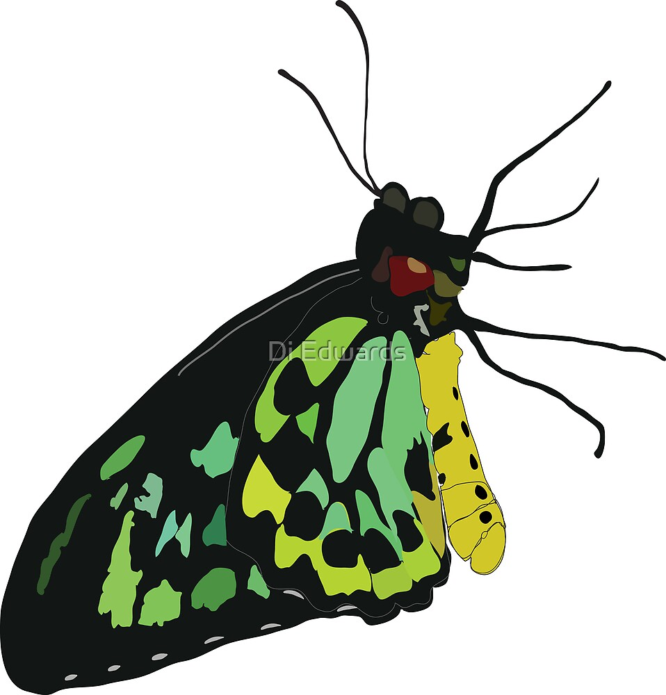 Vector Butterfly by Di Edwards