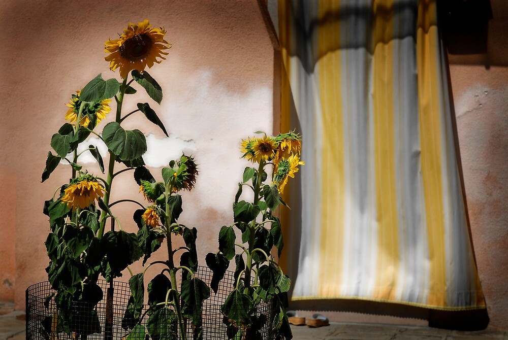 Sunflowers by Joseph  Koprek