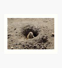 Prairie Dogs V Art Print