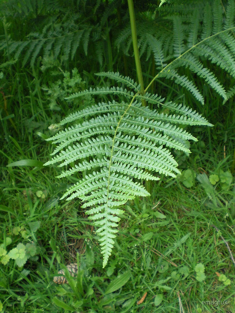 Fern frond by emagtuk