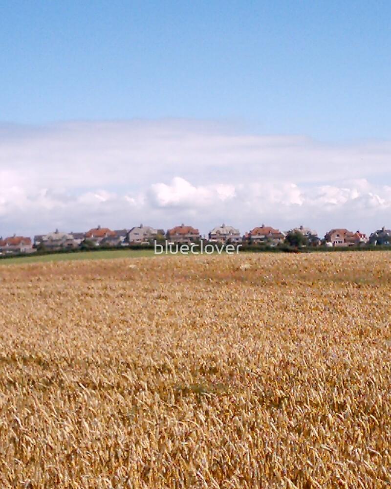 Crops field by blueclover