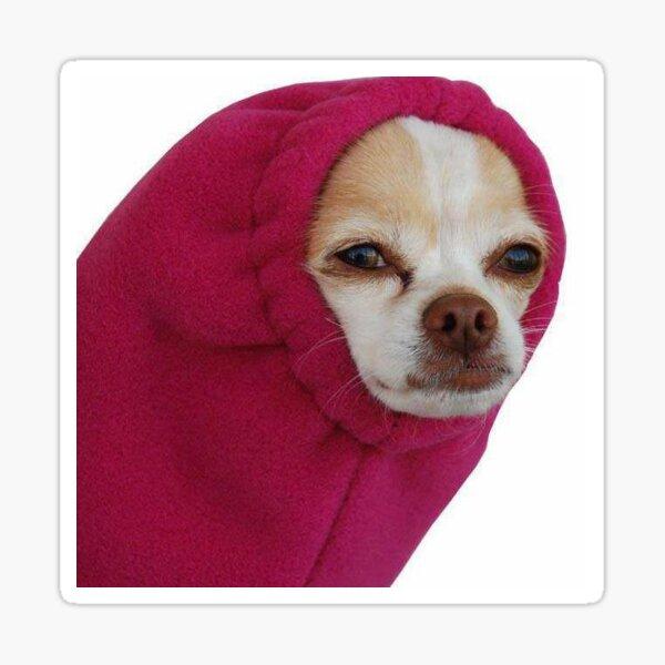 Chihuahua Pegatina