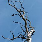 Dead Tree by Andy Harris