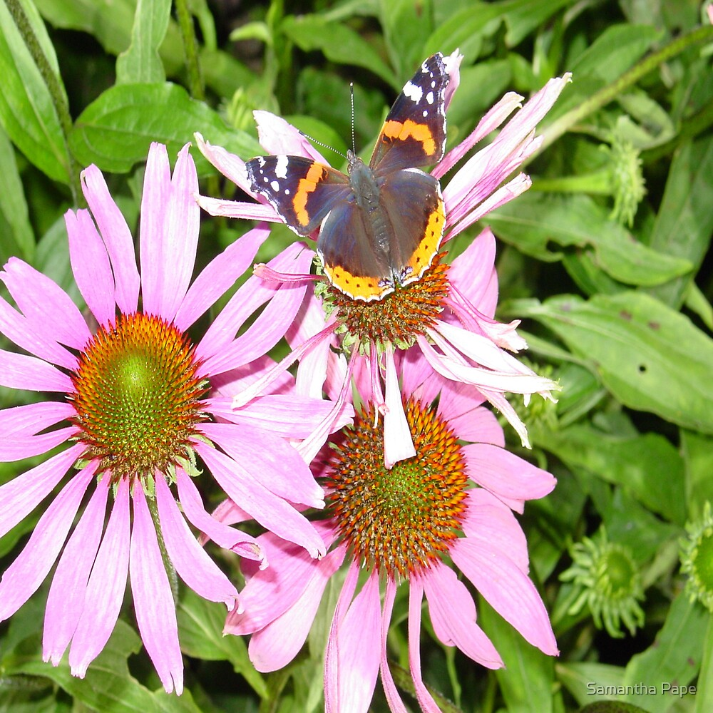 Beautiful Butterfly by Samantha Pape