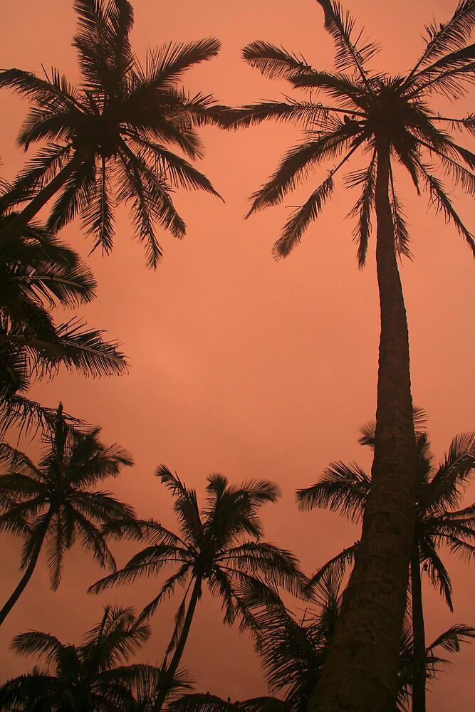 Palm Trees by Herman Greffrath
