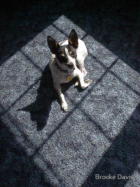 Potsie in the Sun by Brooke Davis