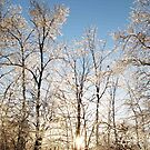 Winter Wonderlight by carolcath