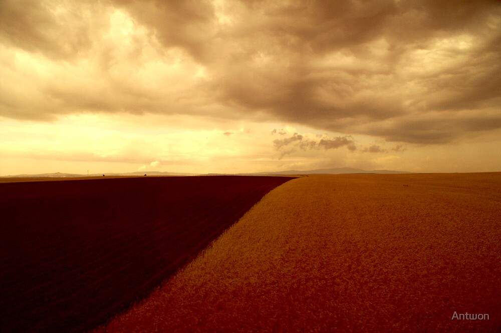 Amber Field 2 by Antwon