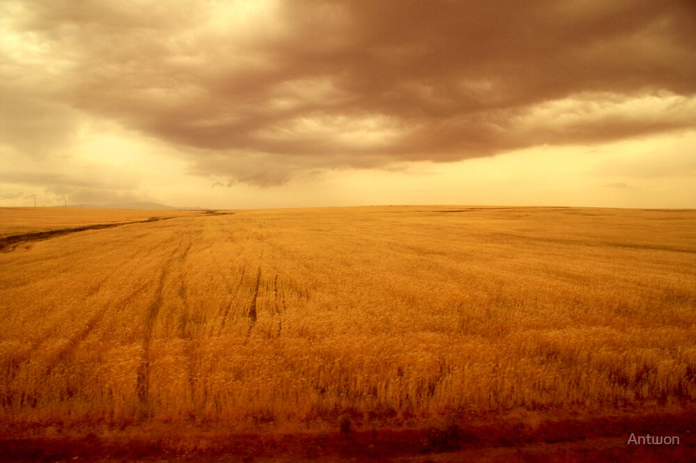 Amber field 1 by Antwon