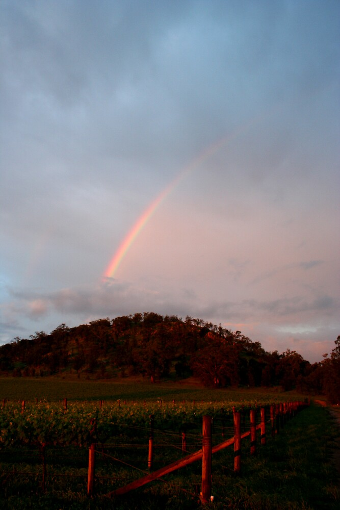 Winery Rainbow by Lindsay Knowles