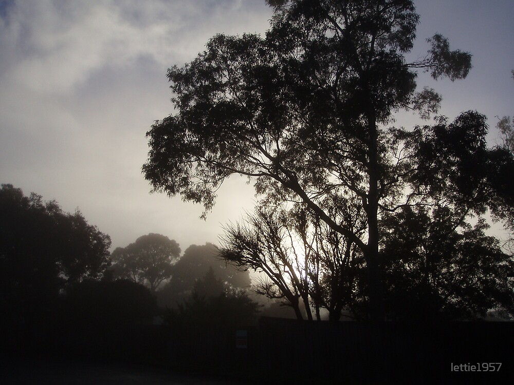 Trees in the Morning Mist  by lettie1957