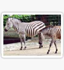 Zebras from the Berlin Zoo 2007 Sticker