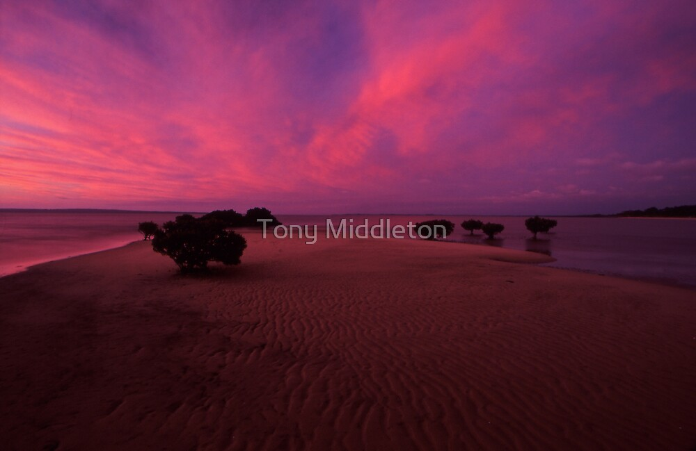 Rippled sand - Westernport bay, Vic. by Tony Middleton
