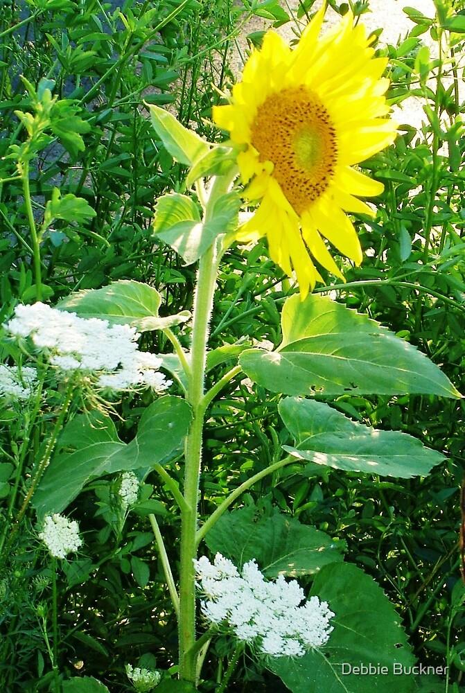 OR Sunflower by Debbie Buckner