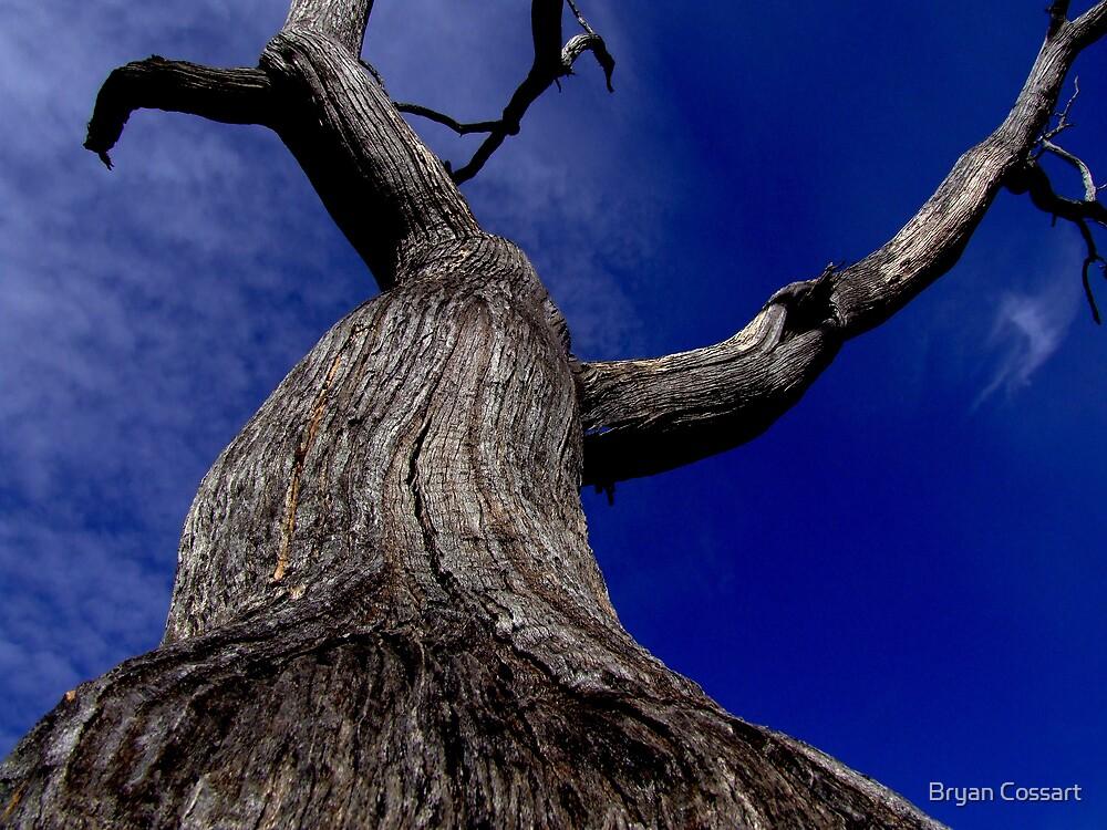 Habitat tree by Bryan Cossart