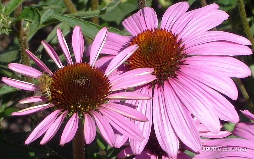 Two Flowers & a Bee by Debbie Buckner