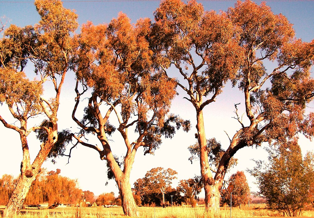 Outback trees by charmaine