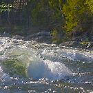 Salmon rivers in Norway . Neselva. Andrzej Goszcz. by © Andrzej Goszcz,M.D. Ph.D