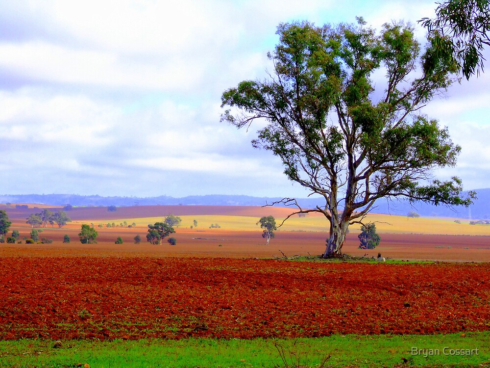 Colourful paddock in the Flinders by Bryan Cossart