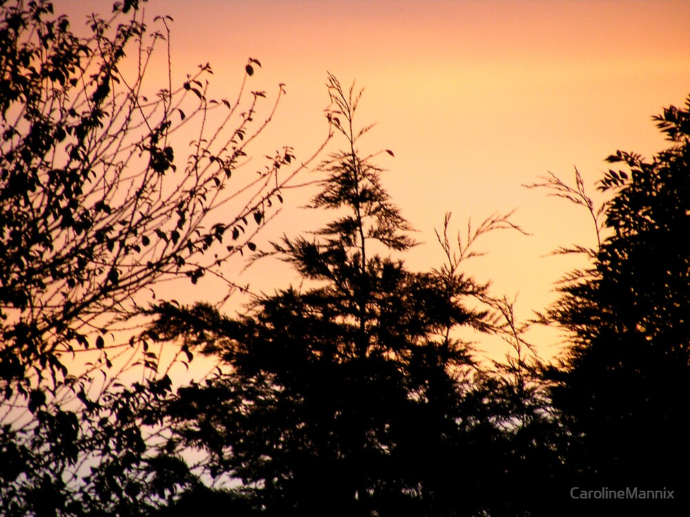 Forest Sunset by CarolineMannix