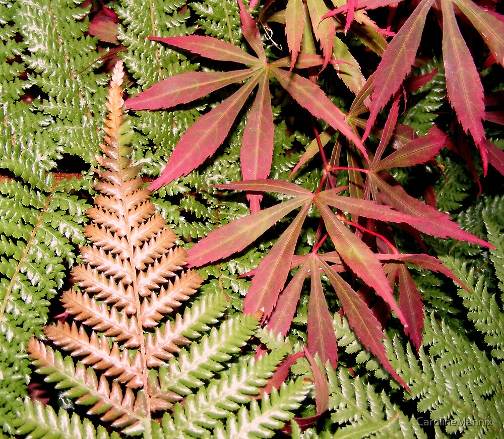 Tree Fern thinks it's an Acer by CarolineMannix