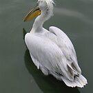 Pelican, Singapore by Tanyamcaleer