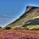 Rhododendron  Mountain by Kevin Hart