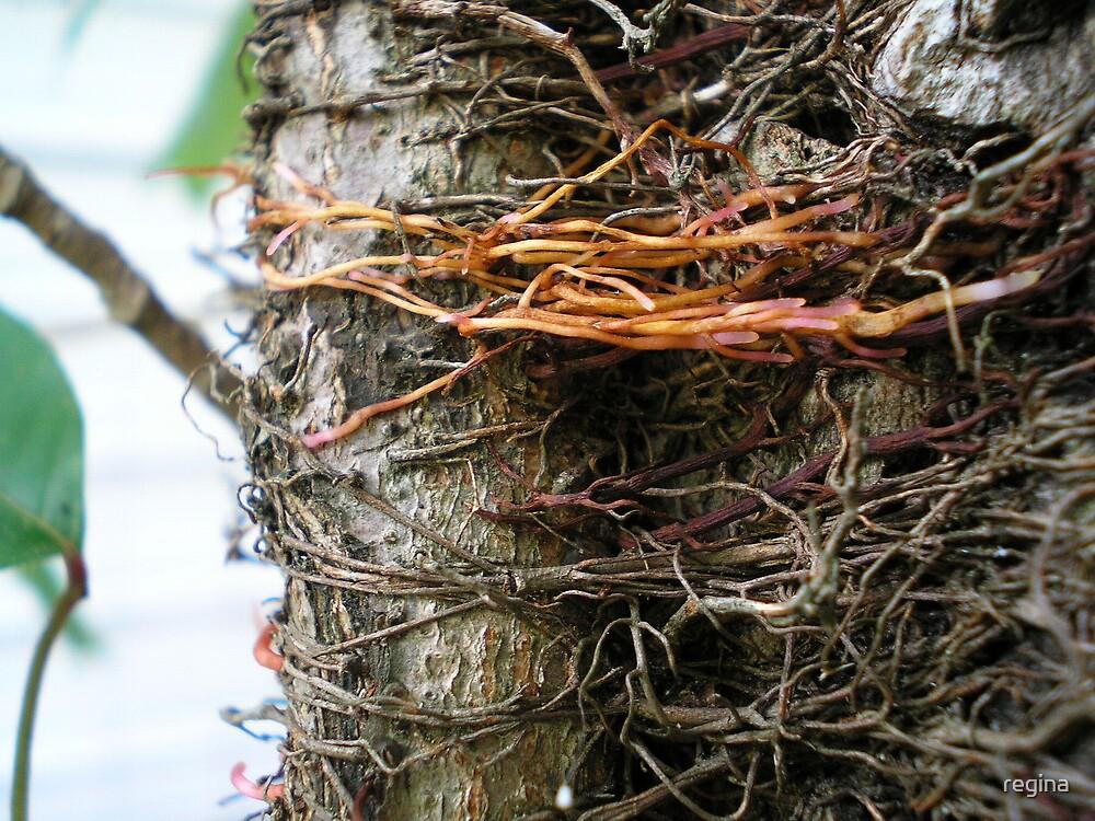 creepy roots by regina