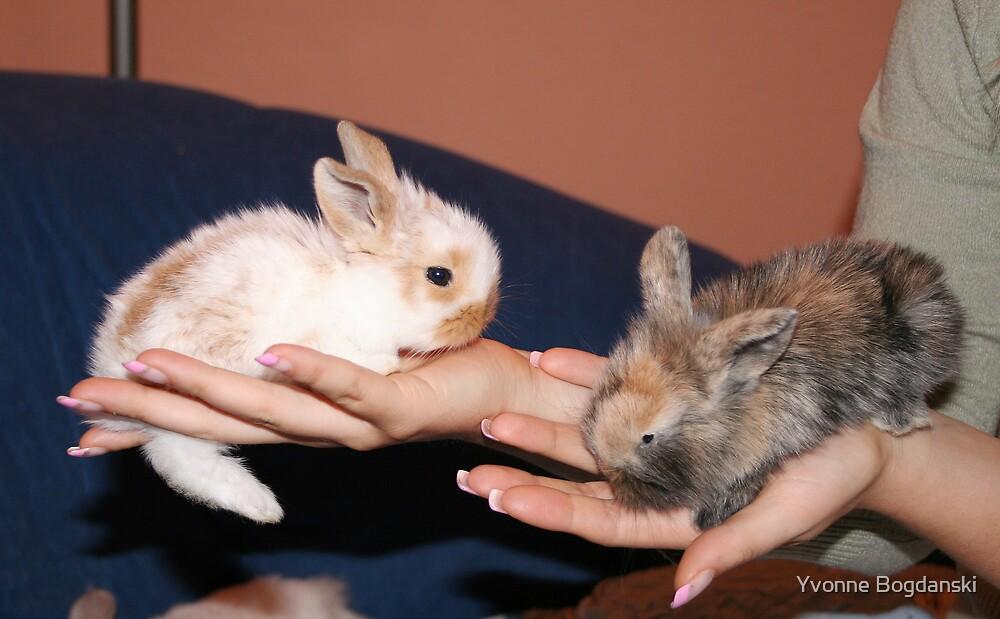 bunnies by Yvonne Bogdanski