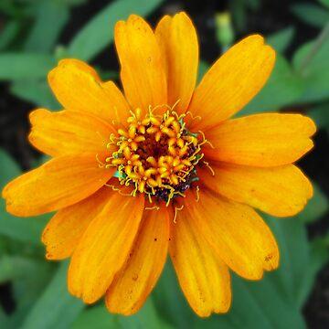 Bloomin' Orange by Jolie2044