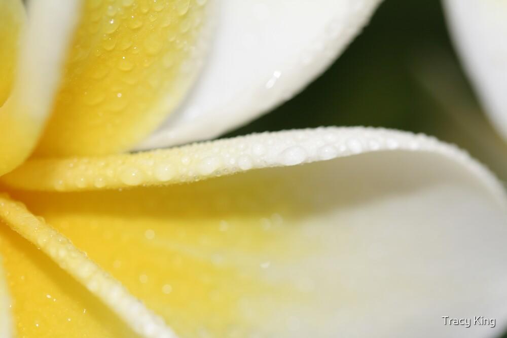 1/2 a frangipani by Tracy King