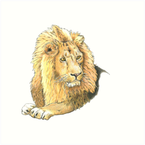 Lion by kurtmarcelle