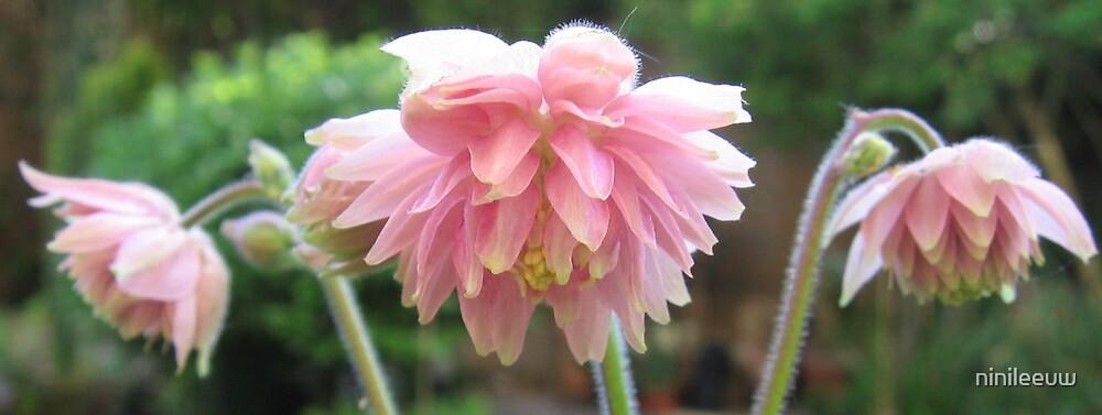 """""""Rose Barlow"""" by ninileeuw"""
