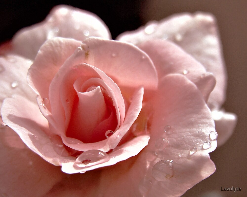 Mom's Rose by Lazulyte
