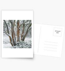 Snow Gum  Postcards