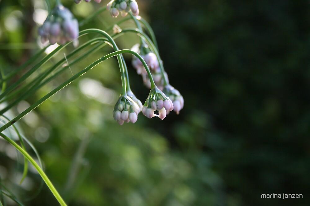 white flower by marina janzen