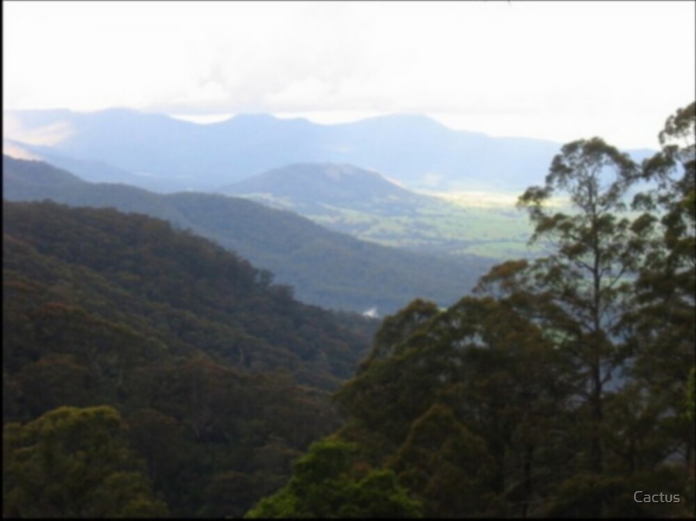 Valley In NSW by Cactus