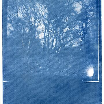 Cyanotype #1 by namke
