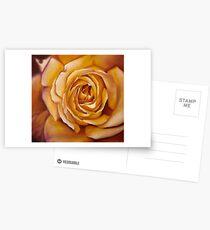 Yellow Rose Cartes postales