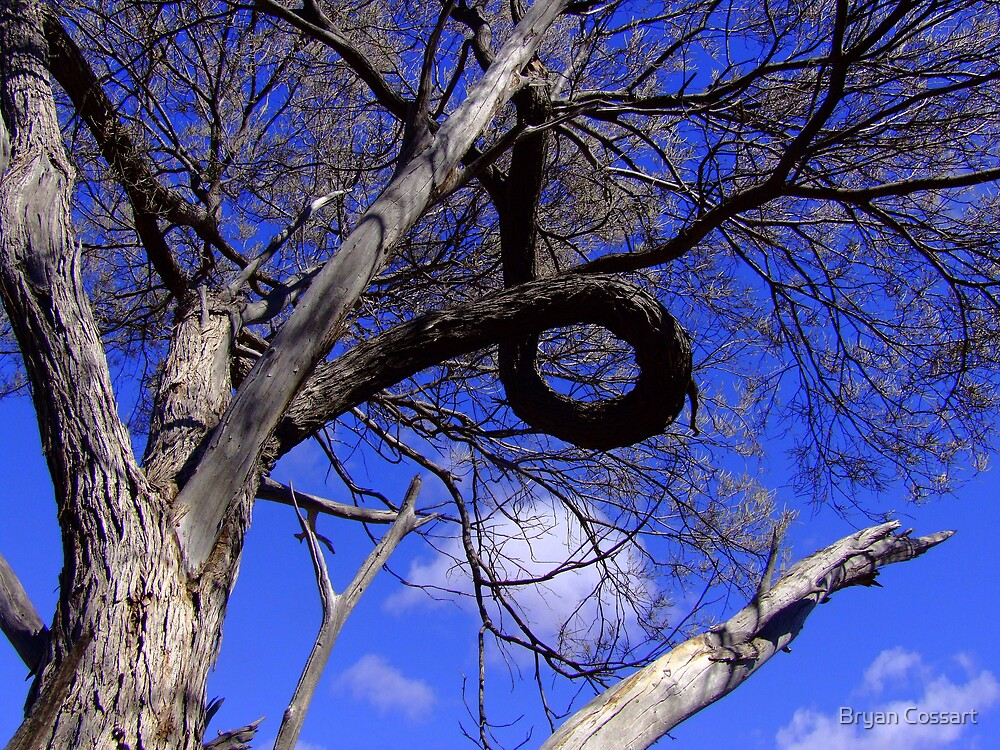 Tyre Tree by Bryan Cossart